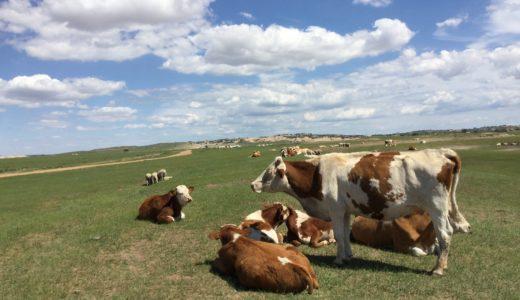 【モンゴルではない?!】大草原の内モンゴルについてご紹介します!