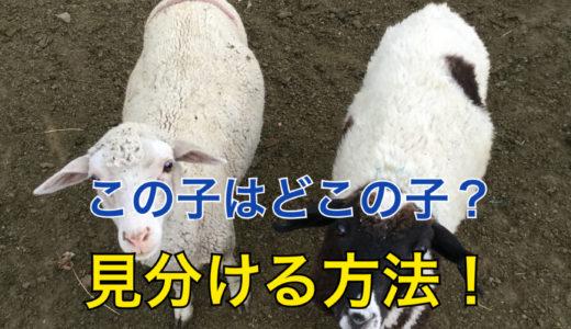 【草原にいる家畜】他の家の家畜と区別する方法【目印がある】