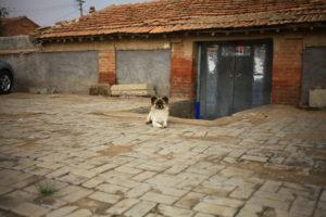 レンガと犬