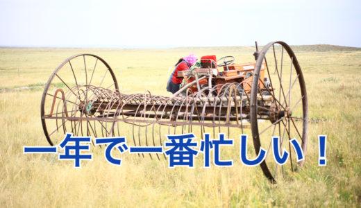 内モンゴルの草原での1日【秋の忙しい草刈りの時期】